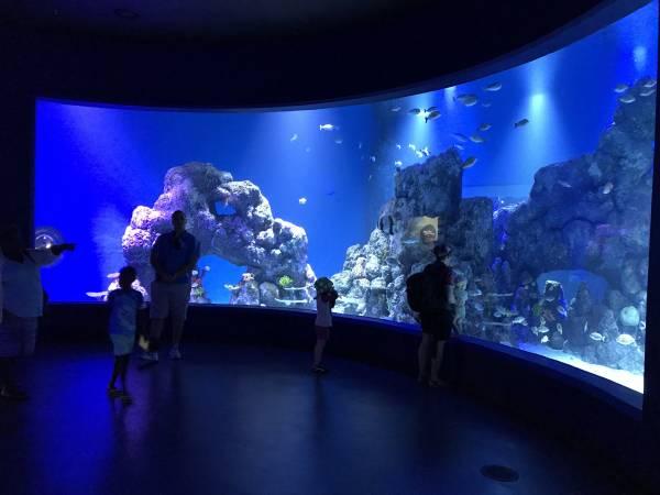 Rundgang im Cairns Aquarium