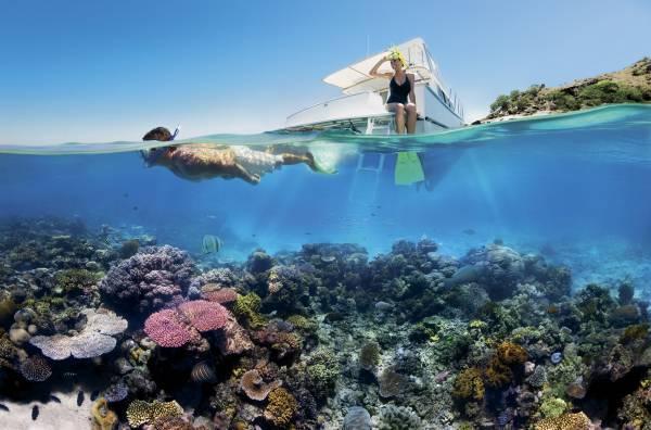 Bild aus Cairns: Schnorcheln am Great Barrier Reef