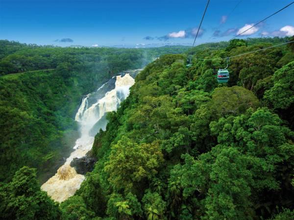 Mit der Skyrail-Gondel über den Regenwald