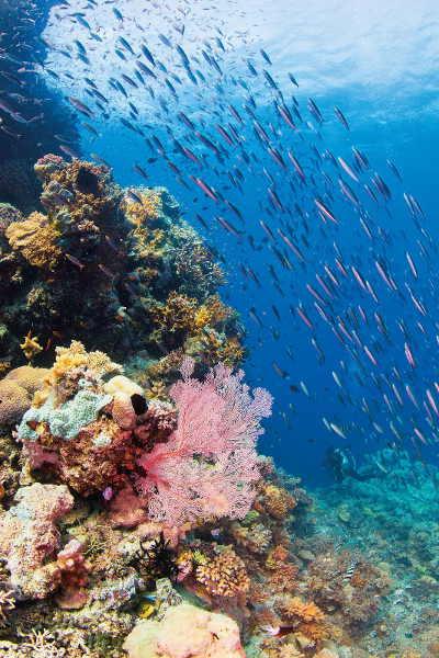 Fischschwarm im Korallenmeer