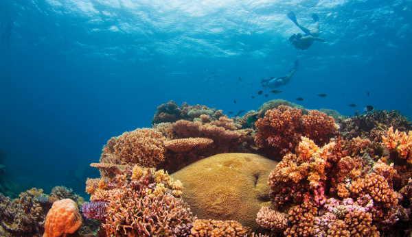 Im Korallenmeer vor Cairns