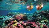 Schnorcheltour am Grat Barrier Reef von Tourism Queensland  c/o Global Spot