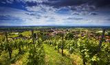 Landschaft bei Ballrechten-Dottingen