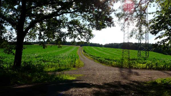 Mühlenbach Schluchten Tour: Weg durchs Maisfeld