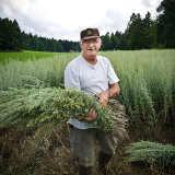 Auf den Absinth Anbaufeldern in der Franche-Comté von C.R.T. Franche-Comté c/o Burckhardt | PR