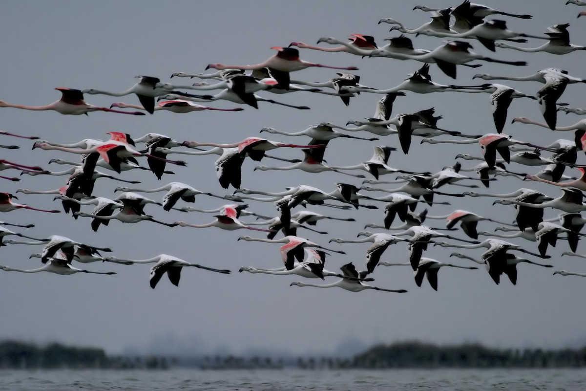Bild aus Comacchio: Flamingos im Podelta-Park