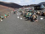 Dromedarstation: Warten auf Reiter  von Majava