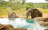 Pool der Motswari Lodge