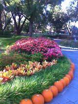 Blumen im Dallas Arboretum von Arnauldsphynx (CC BY-SA 3.0)